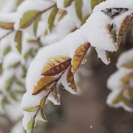 Neve in arrivo per la notte di Santa Lucia Allerta della Protezione civile in Lombardia