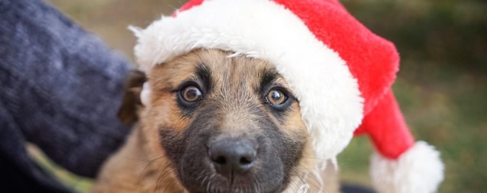Botti di Capodanno Incubo per i cani