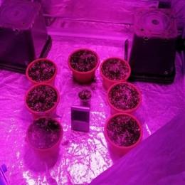 In casa piante di marijuana e allucinogeni Lovere, arrestato giovane di 25 anni