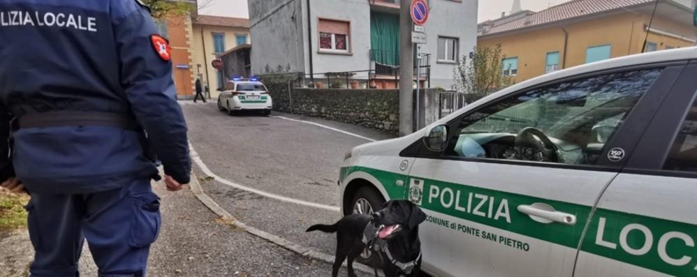 Controlli antidroga a Ponte San Pietro Il cane Shane in azione - Foto