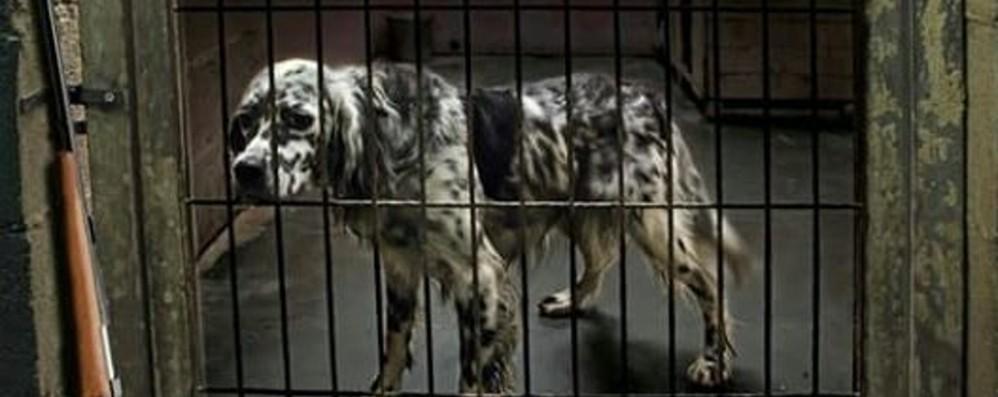 Scoppia La Polemica Sui Cani Da Caccia Denuncia Agli Animalisti Non