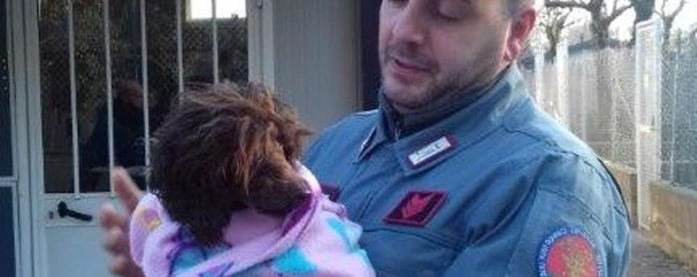 Animali maltrattati a Bedulita Sequestrati cani, gatti e volatili