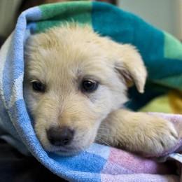 Traffico illecito di cuccioli  I consigli di Paolo Bosatra