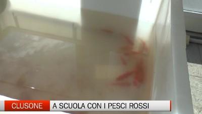 Pesciolini rossi  a scuola. Saranno loro i protagonisti delle coltivazioni del futuro