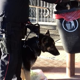 Blitz con cani anti droga a Zingonia Sequestrati hashish e cocaina, un arresto