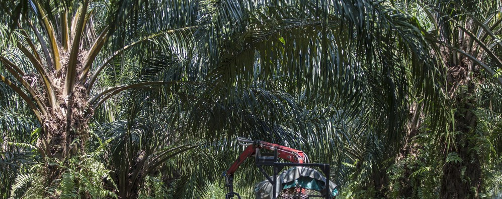 Ue impone stop olio di palma in biodiesel entro 2030