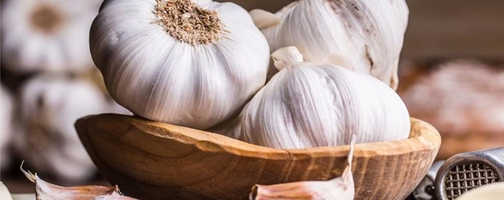 Alla scoperta dell'aglio