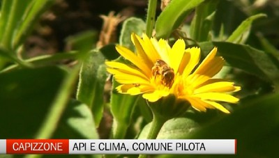Le api raccontano i mutamenti climatici Capizzone tra i comuni pilota