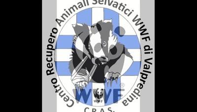 Wwf, il rarissimo esemplare di gru cinerina curata e  liberata in Valpredina