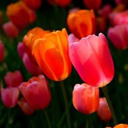 Evviva la primavera!