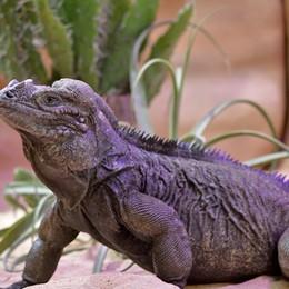 Nuovo rettilario alle Cornelle - Foto Scopri le cinque nuove specie - Video