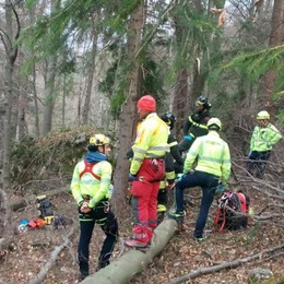 Travolto dall'albero che stava tagliando Nuova tragedia, muore 80enne a Serina