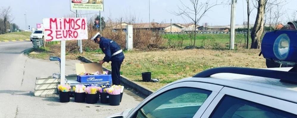 Vendeva mimose a 3 euro sulla statale 42 Verdello, maxi multa da cinquemila euro