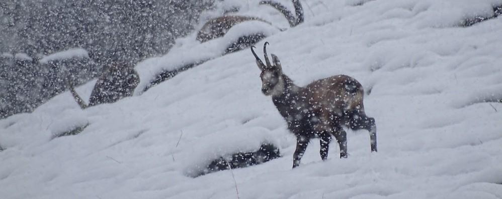 Aprile con la neve sopra i mille metri Nelle valli oltre 20 centimetri - Foto