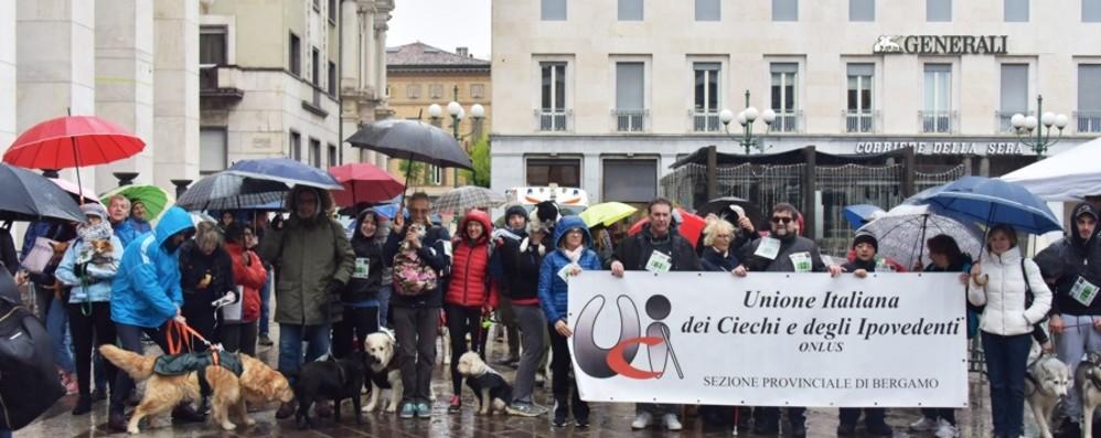 Bergamo, «Corri Dog» sotto la pioggia Una festa per gli amici a quattro zampe