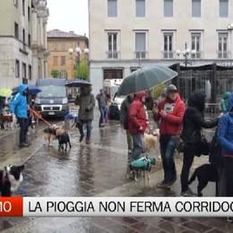 Bergamo, la pioggia non ferma «Corridog»