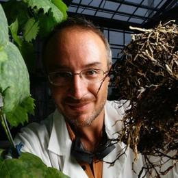 Stefano Mancuso  e il mondo vegetale