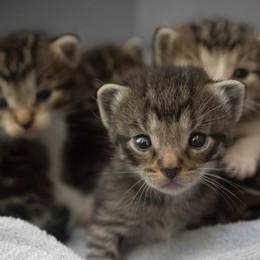 Al lavoro contro il randagismo  Ats a favore di cani e gatti