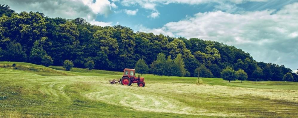 Aziende agricole e giovani imprenditori Finanziamenti per 11 nuove realtà