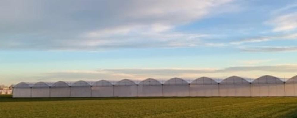 """«Le serre non """"mangiano"""" terreno» Coldiretti: offrono qualità e lavoro"""