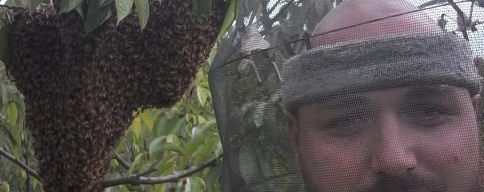 Il freddo non aiuta gli apicoltori Miele di acacia a rischio