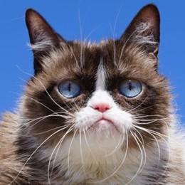 È morta Grumpy Cat Il gatto star della Rete