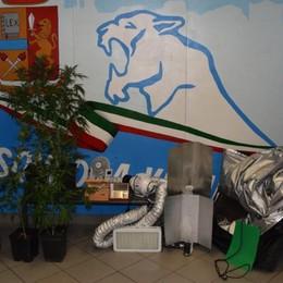 In casa una serra di piante di marijuana Scoperto dalla polizia, droga sequestrata