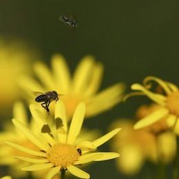 Maltempo, «Sos» api in Lombardia Allarme anche in Bergamasca