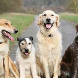 I vicini si lamentano per la puzza e i latrati Verdello, donna aveva in casa 53 cani