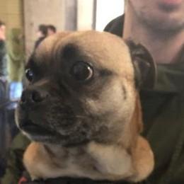 Villa d'Almè-Dalmine, ritrovato un cane Sta bene, ora si  cercano i proprietari