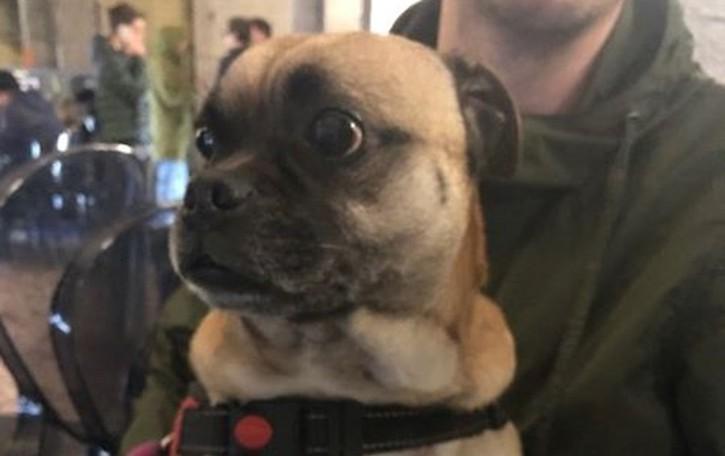 Torna a casa il cane smarrito Fuggito per il temporale