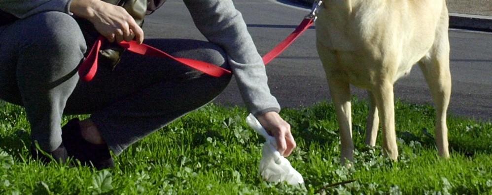 Non pulire lo sporco del cane a terra? Mapello, rischio multe fino a 1.500 euro