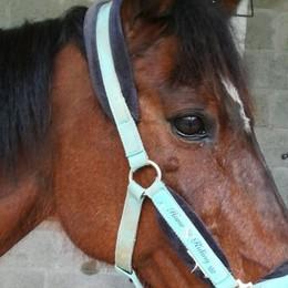 Arcene, la proprietaria cade Cavallo al galoppo sulla statale