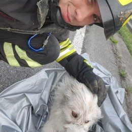 Cane con la zampa rotta nel canale Albino, salvato dai Vigili del Fuoco