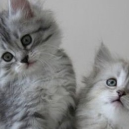 A processo a Lecco la «killer dei gattini» La denuncia era partita da Bergamo