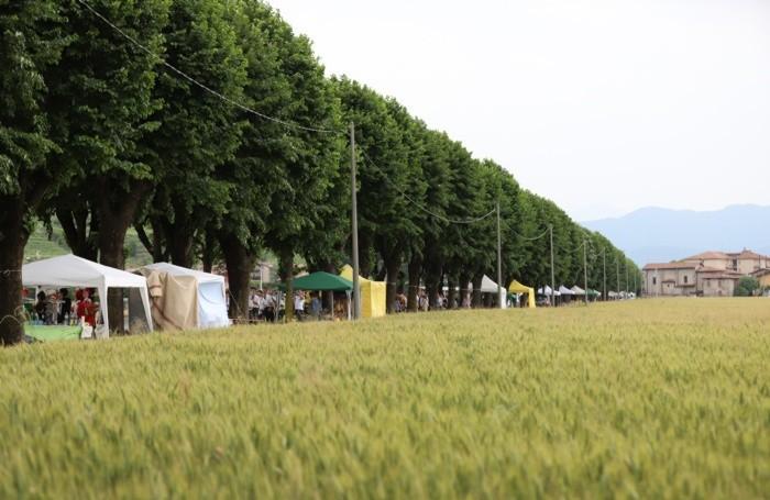 Eco café mapello lungo il viale