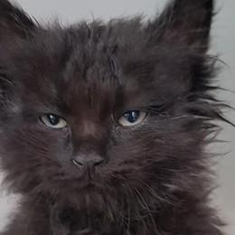 Gattino incastrato nel motore di un'auto Fuliggine, salvato dai Vigili del fuoco