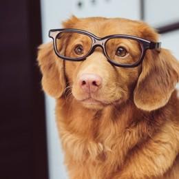 Il cane in ufficio,  un trend in crescita