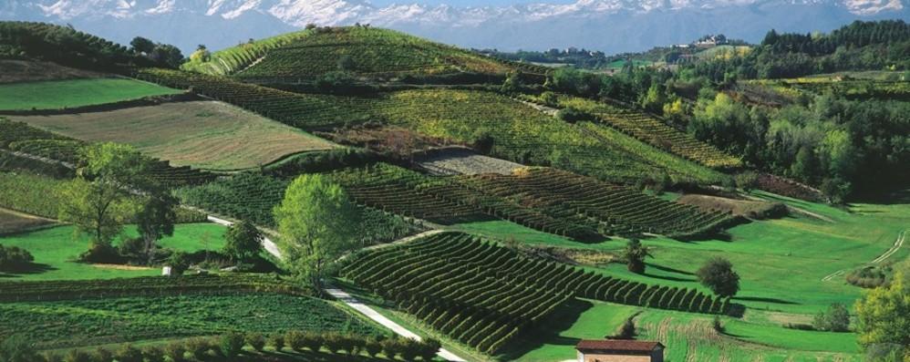 Langhe-Roero e Monferrato da 5 anni nella lista Unesco