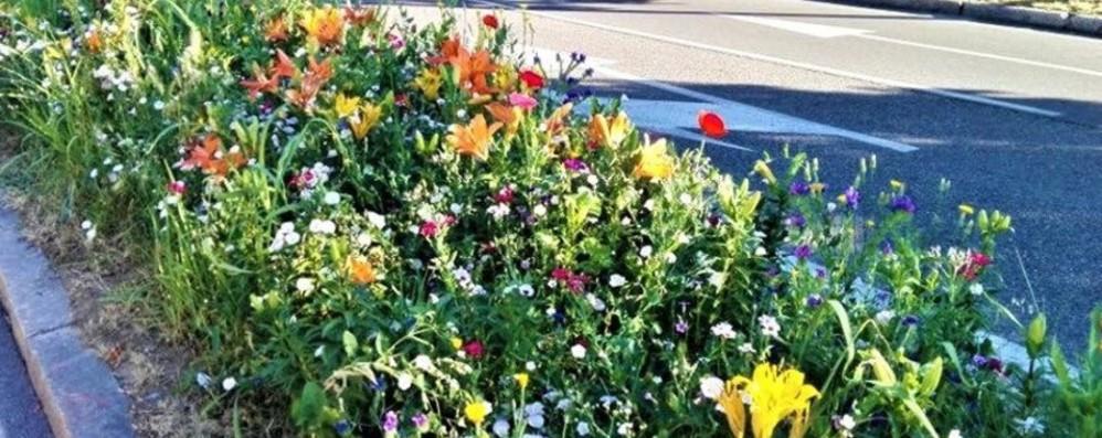 L'estate esplode nelle aiuole Bergamo si colora di fiori - Foto