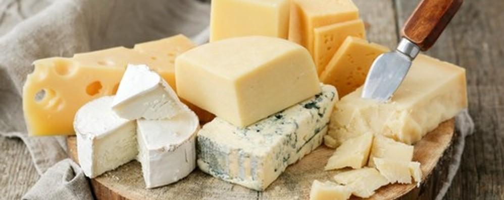 A lezione per imparare a fare il formaggio