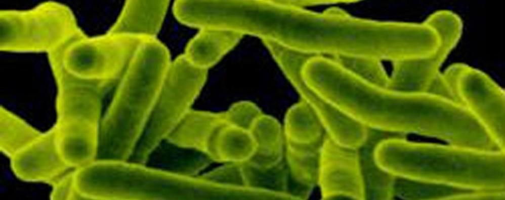 Caso di tubercolosi in Università Avviata la procedura di prevenzione