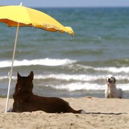 Fido in spiaggia, il vademecum Diritti e doveri dei padroni