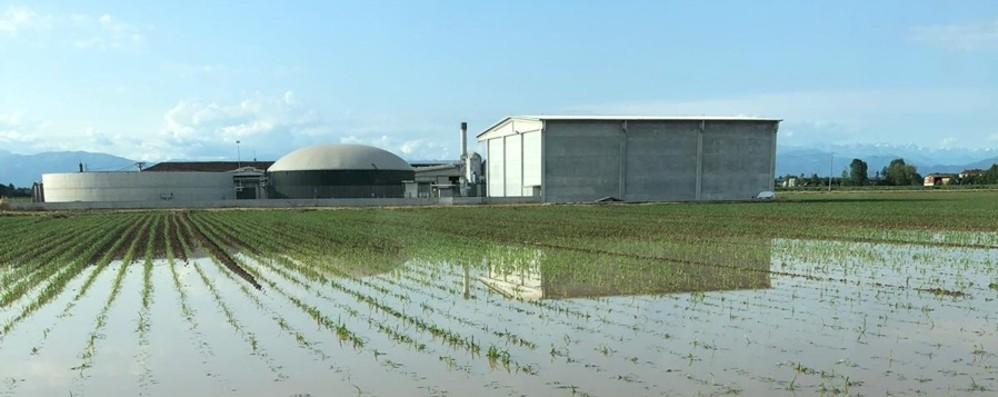 Maltempo, la conta dei danni Campi di mais devastati nella Bassa