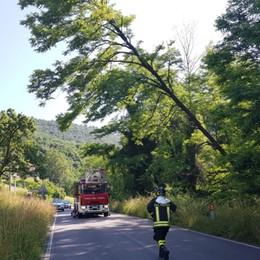 Albero «sospeso» a Dossello Vigili del fuoco, intervento di 2 ore