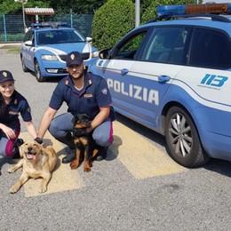 Due cani dormono in A4, salvati  Erano scappati dal cortile di  un'azienda