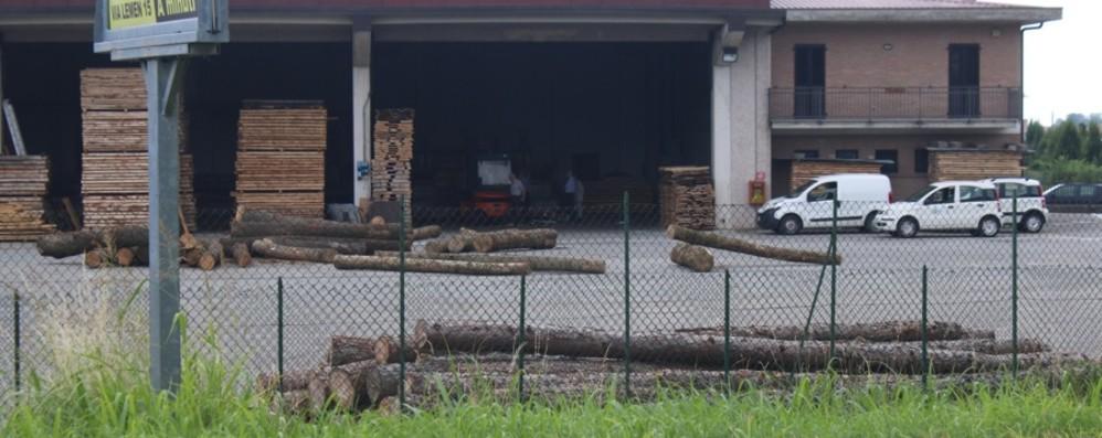 Schiacciato da un tronco: grave 61enne L'infortunio in un'azienda di legnami
