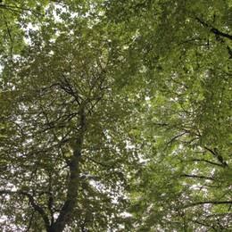 Gli alberi antidoto contro smog e caldo Bergamo, verde urbano aumenta