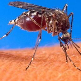 Le zanzare pungono chi ha  il sangue dolce? È una fake news