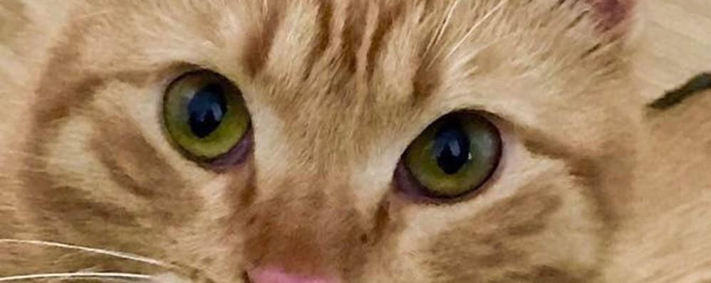 Spara al gatto del vicino e lo uccide Calusco, 40enne denunciato